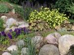 2008-pondflowers-025