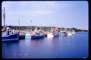 Typical Harbor Scene