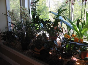 Barb's Orchid Collection