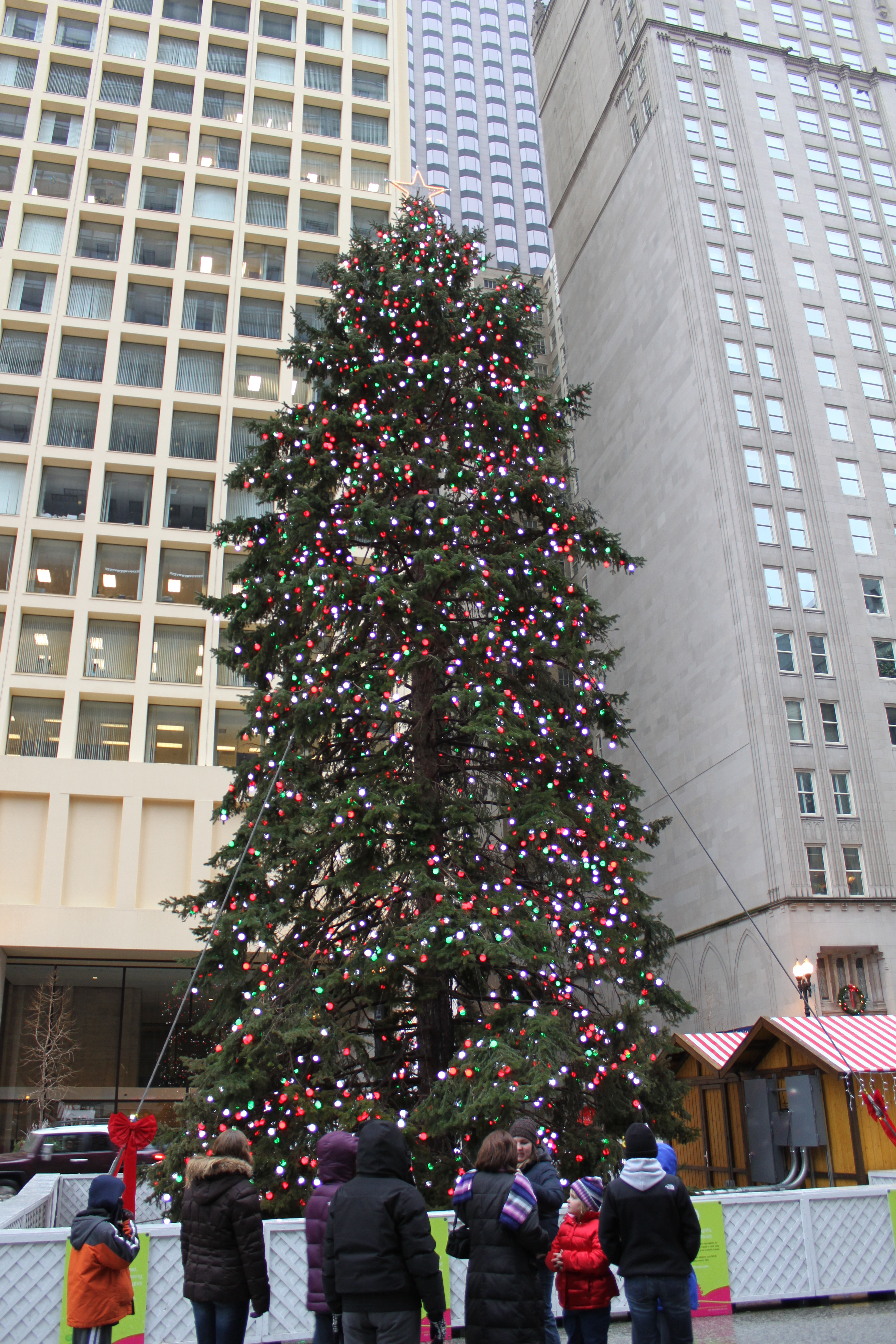 the - Christmas Trees Chicago