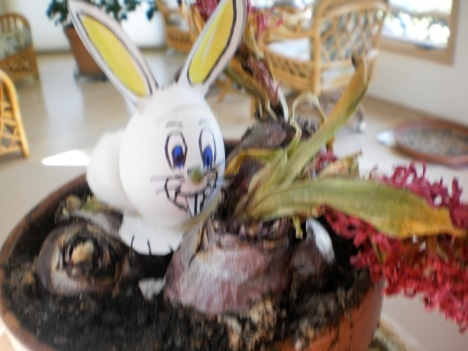 Wabbit eating a Hyacinth bulb
