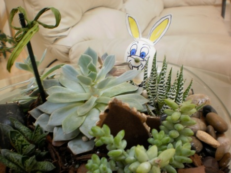 Wabbit eats succulents