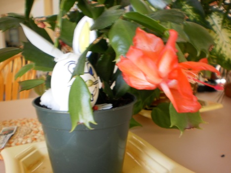Wabbit Chews on Christmas Cactus