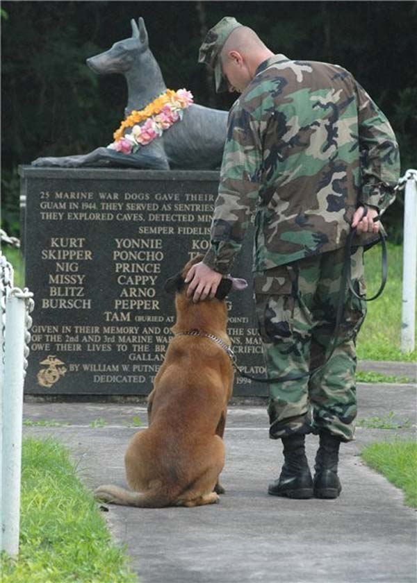 Pictures of War Memorials in Washington dc War Dog Memorial Washington