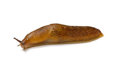 slug_1627430c