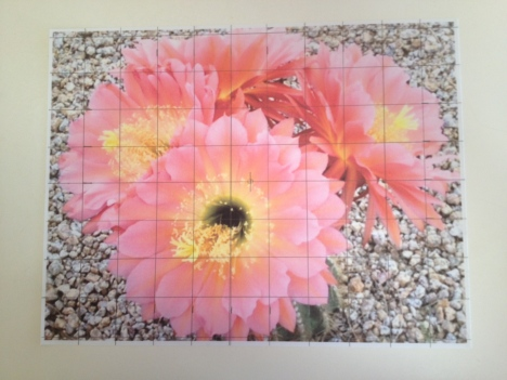 Draw a 1x1 grid on the hardcopy photo with pencil