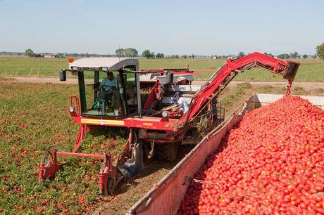 Tomato Harvester.jpg
