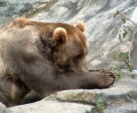 bear-praying.jpg