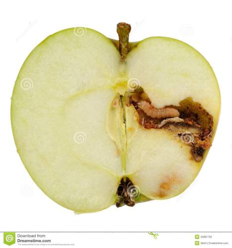 worm-eating-apple-white-background-maggot-larva-cut-half-45881792.jpg