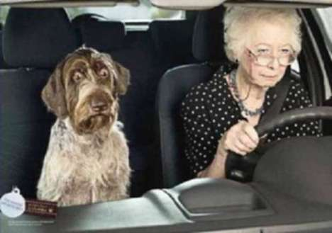 scary-drivers-500-granny-driving-dog-scared1wtmk.jpg