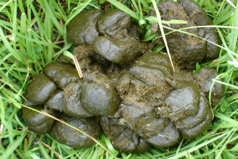 why-does-your-horse-poo....horse-manure-002.jpg